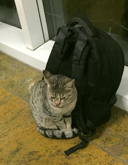 The Cat in the Mess with a Backpack